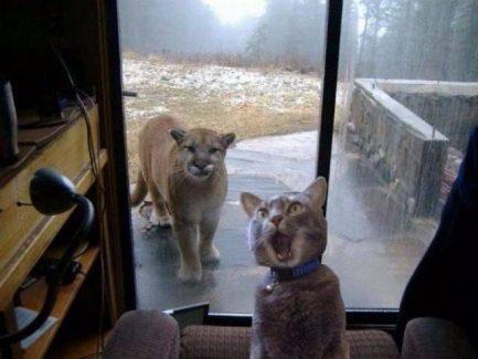 Що робити, коли дзвонять у двері або намагаються зламати їх зовні
